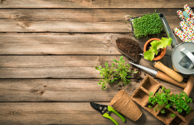 Tending Your Financial Garden: Portfolio Rebalancing